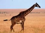 Kenya - Masai Mara 49