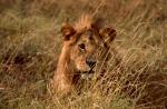 Kenya first