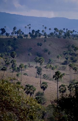 Indonesia 13 - Rinca
