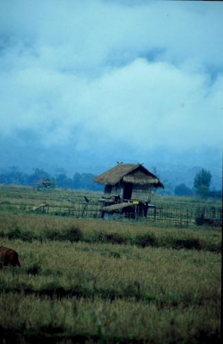 Laos - Golden Triangle 003