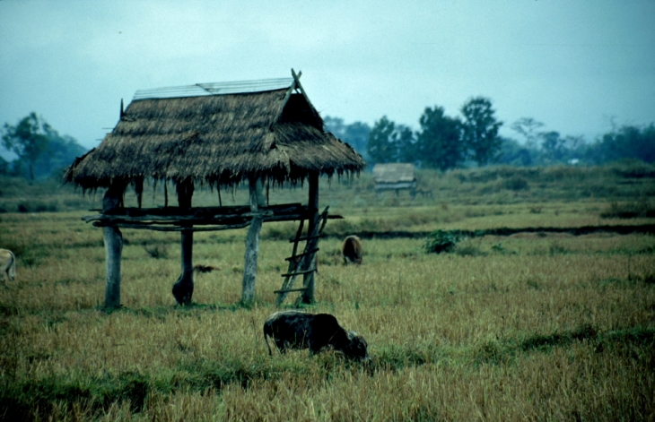 Laos - Golden Triangle 002