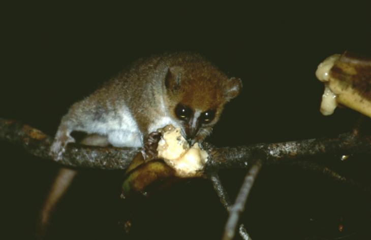 Madagascar - North 02 - Ankarana