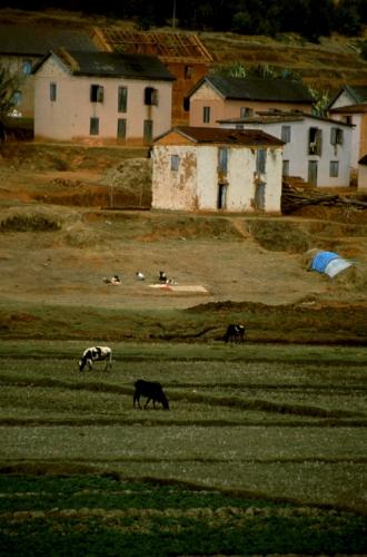 Madagascar - Central Highlands 003