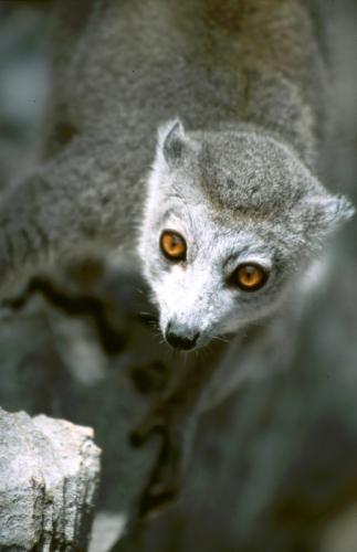 Madagascar - North 04 - Ankarana
