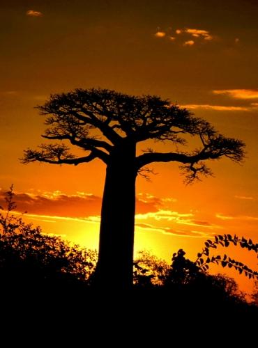 Madagascar - Baobabs 01