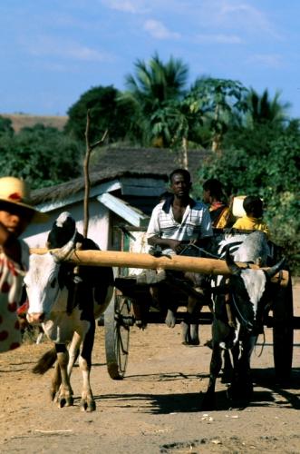 Madagascar - Central Highlands 033
