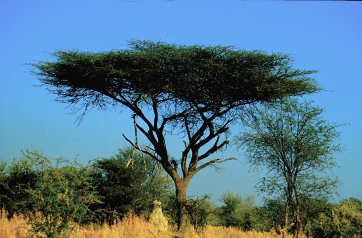 Botswana - Okavango Delta 026