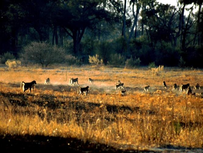 Botswana - Okavango Delta 027