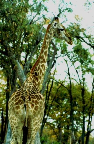Botswana - Chobi & Moremi NP 001
