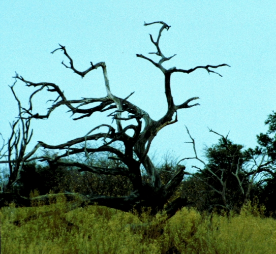 Botswana - Chobi & Moremi NP 004