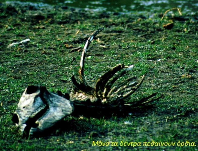 Botswana - Chobi & Moremi NP 005