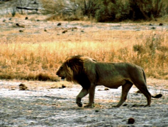 Botswana - Chobi & Moremi NP 006