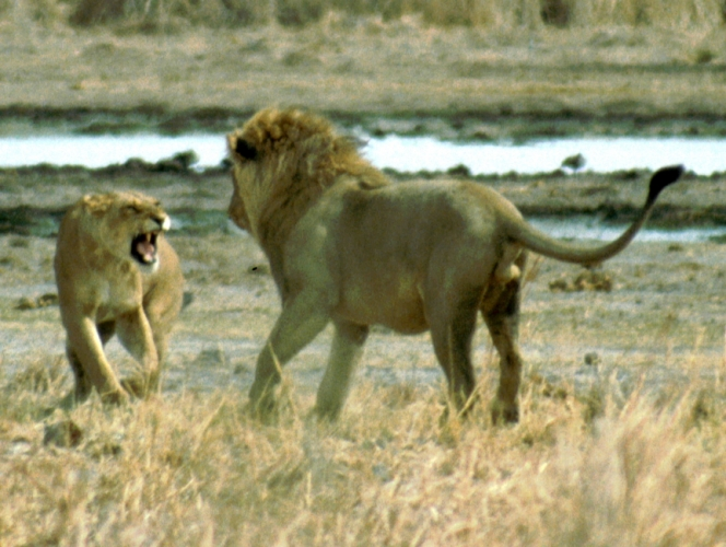 Botswana - Chobi & Moremi NP 007