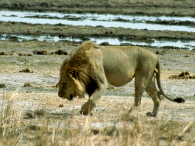 Botswana - Chobi & Moremi NP 008