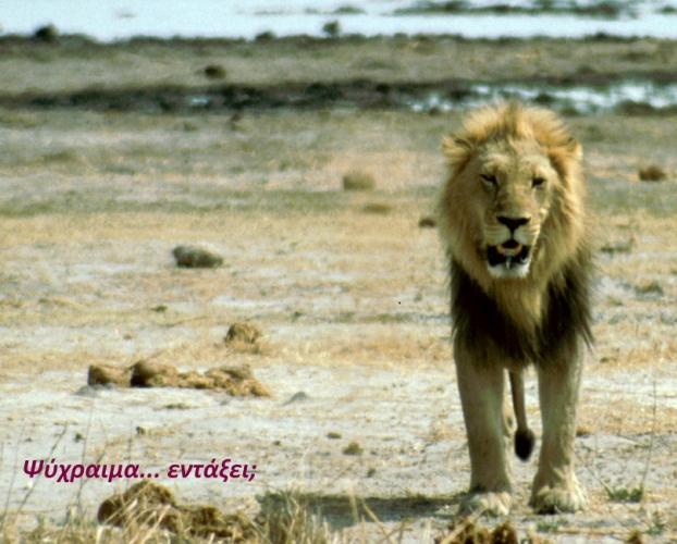 Botswana - Chobi & Moremi NP 009
