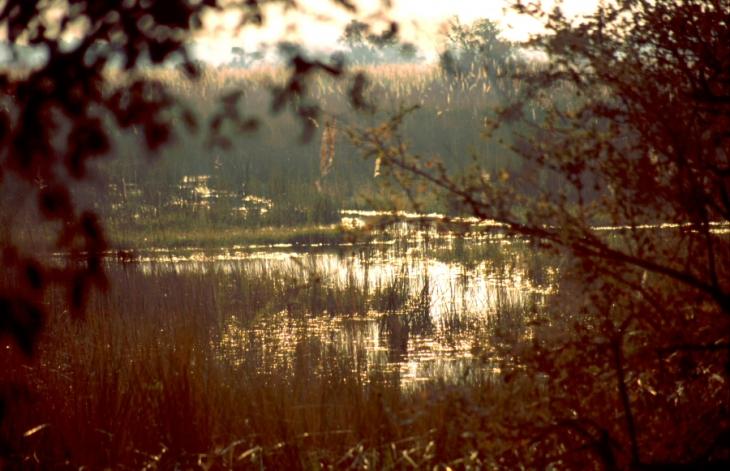 Botswana - Chobi & Moremi NP 014