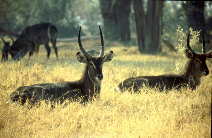 Botswana - Chobi & Moremi NP 018