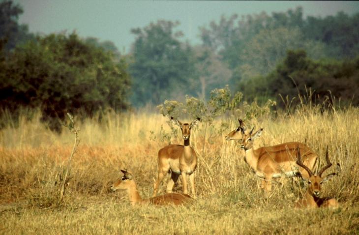 Botswana - Chobi & Moremi NP 023
