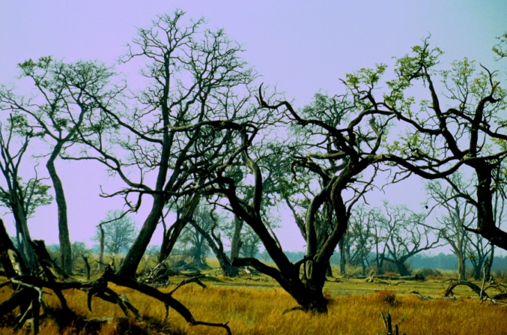 Botswana - Chobi & Moremi NP 024