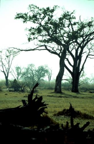 Botswana - Chobi & Moremi NP 025