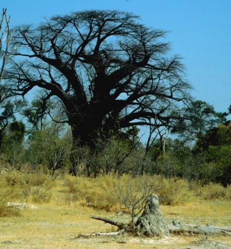 Botswana - Chobi & Moremi NP 026