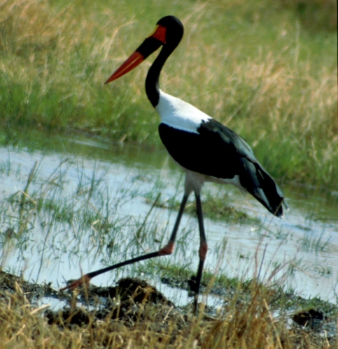 Botswana - Chobi & Moremi NP 027