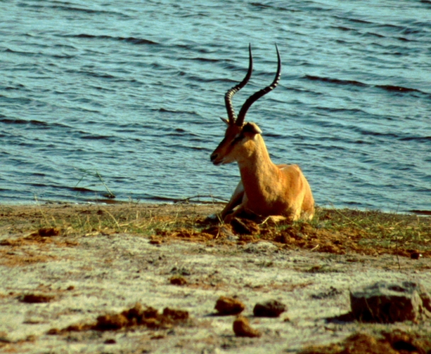 Botswana - Chobi & Moremi NP 029