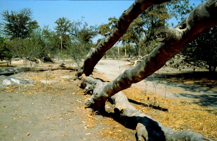 Botswana - Chobi & Moremi NP 030
