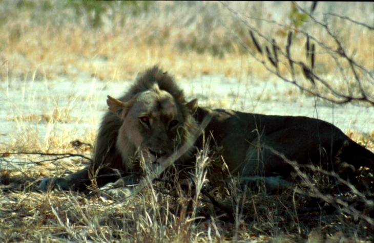 Botswana - Chobi & Moremi NP 034