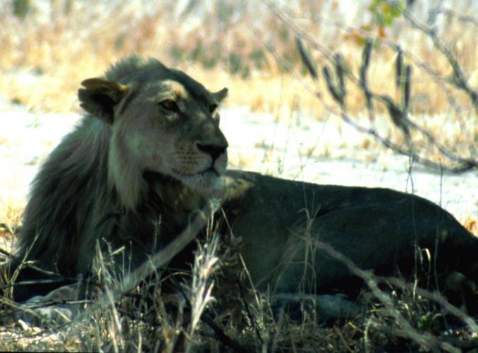 Botswana - Chobi & Moremi NP 035