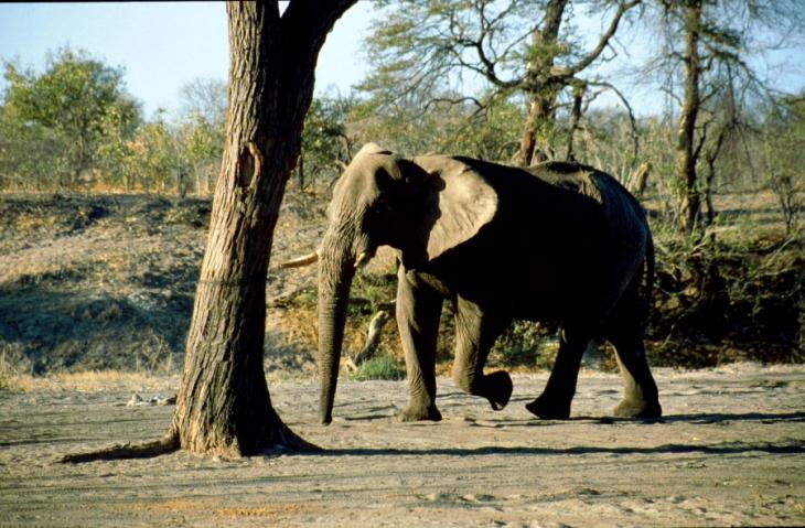 Botswana - Chobi & Moremi NP 036