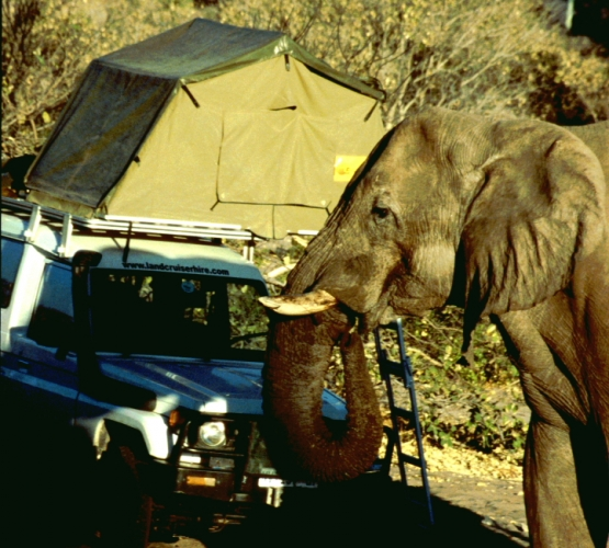 Botswana - Chobi & Moremi NP 040