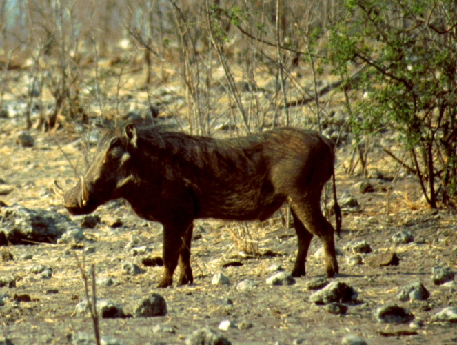 Botswana - Chobi & Moremi NP 041