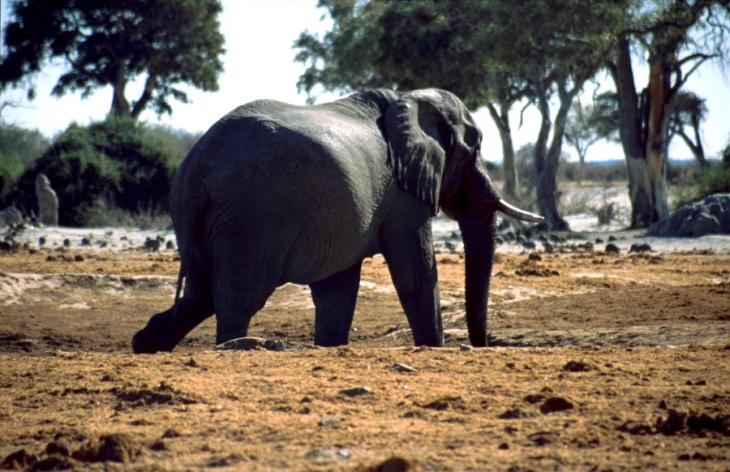 Botswana - Chobi & Moremi NP 043
