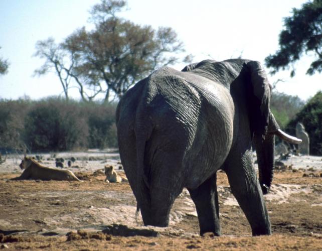 Botswana - Chobi & Moremi NP 044