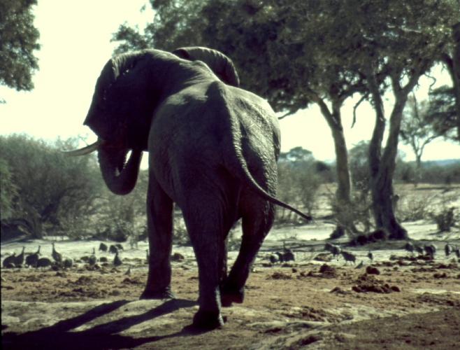 Botswana - Chobi & Moremi NP 045