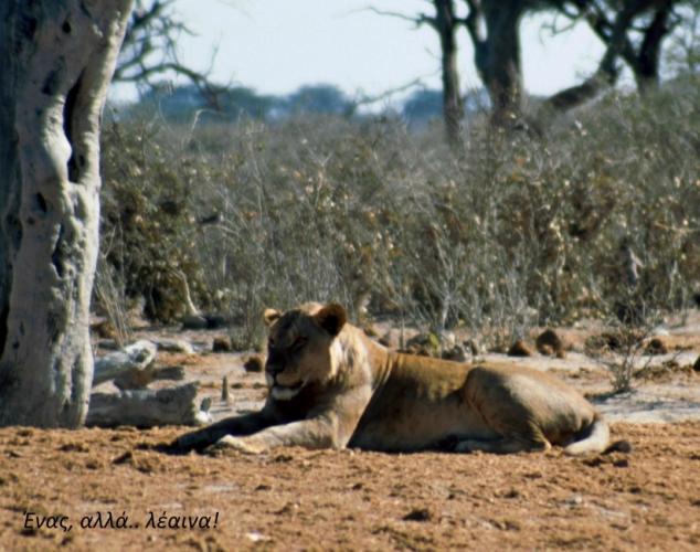 Botswana - Chobi & Moremi NP 046