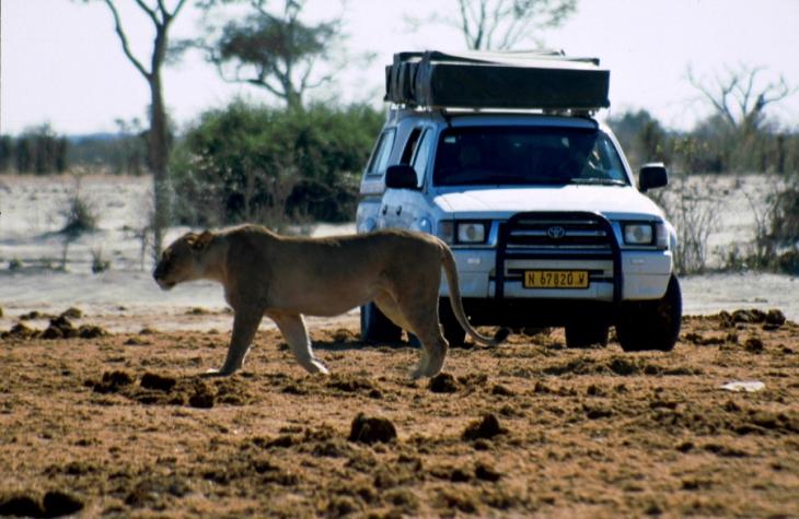 Botswana - Chobi & Moremi NP 047