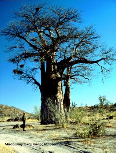 Botswana - Chobi & Moremi NP 051