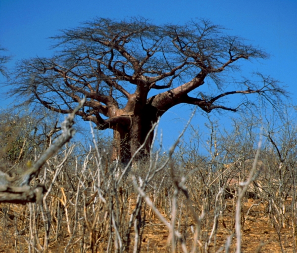 Botswana - Chobi & Moremi NP 052