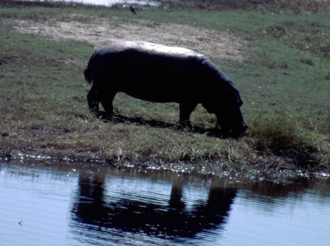 Botswana - Chobi & Moremi NP 057