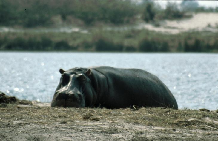 Botswana - Chobi & Moremi NP 058