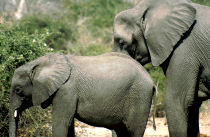 Botswana - Chobi & Moremi NP 060