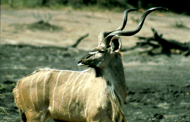 Botswana - Chobi & Moremi NP 061