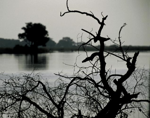 Botswana - Chobi & Moremi NP 063