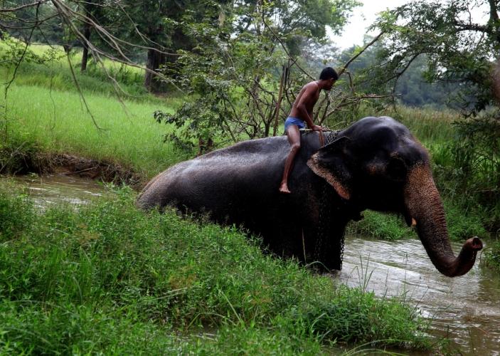 Sri Lanka 059 - Harabana