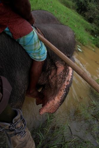Sri Lanka 057 - Harabana