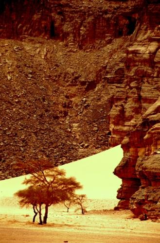 Algeria - Sahara 009