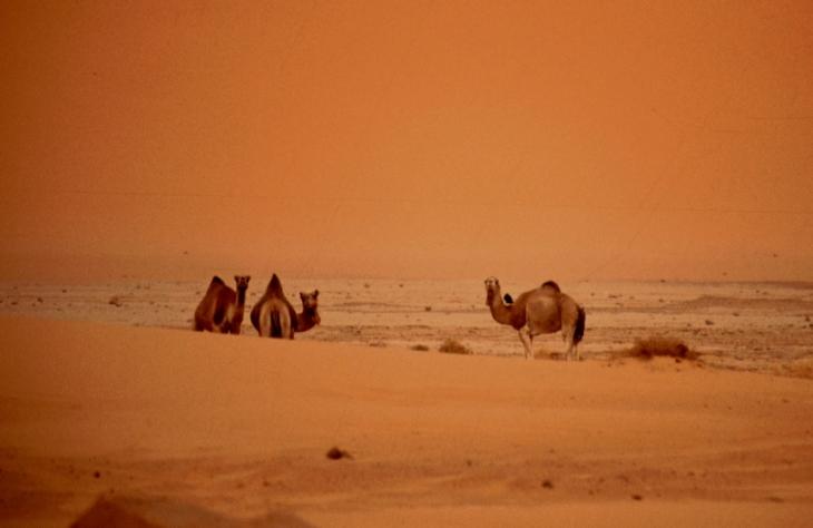 Algeria - Sahara 054