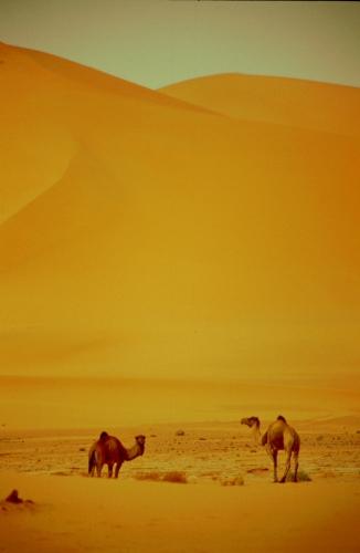 Algeria - Sahara 056